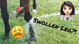 Treat a horse's swollen leg // Vet Tips