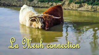 La meuh connection