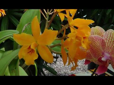 Tucson Orchid Society @ Mesquite Valley Growers  A Grand Slide Show !