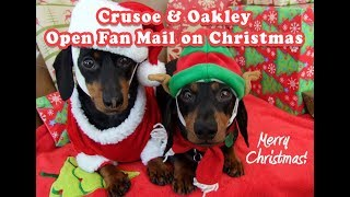 Crusoe & Oakley Live Steaming Opening Fan Gifts on Christmas thumbnail