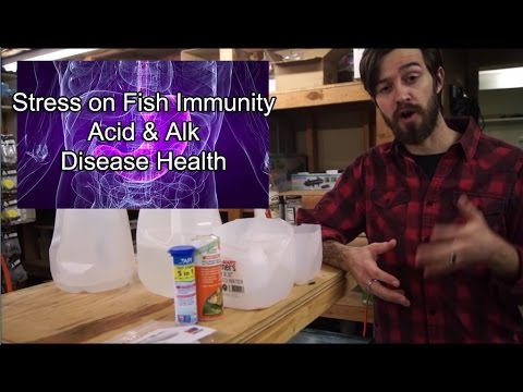 Fish Health- Quick PH/Redox Demonstration