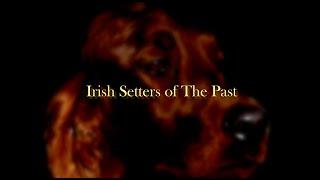 Irish Setters of The Past  Presented by Irish Setters UK & Ireland