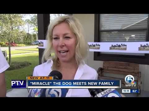 On The Web - Meet Miracle The Dog's Adopted Family!