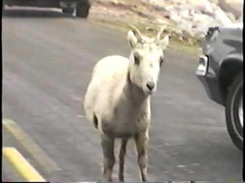Denver 1999 Mount Evans Drive