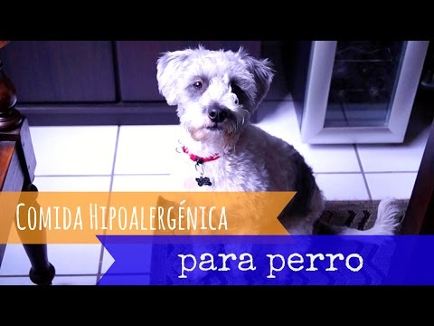 DIY Comida hipoalergénica para perro | Julieta Jareda