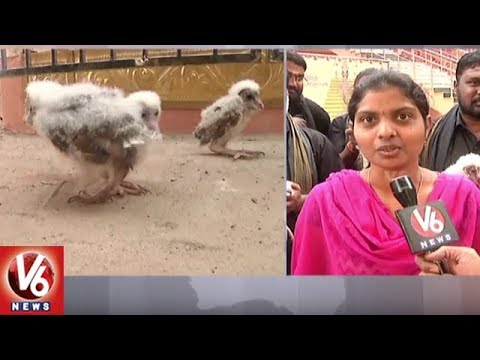 Mysterious 'Alien' Birds Found In Visakhapatnam | Experts Say They Are From Owl Species | V6 News