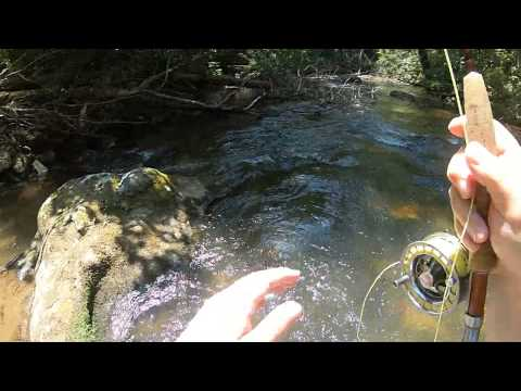 North GA Fly Fishing For Trout
