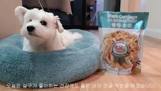 바삭바삭/상어연골/리얼사운드 /강아지 먹방/강아지 AS…