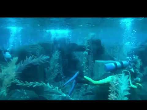 Finding Nemo Submarine Voyage At Dusk 2019