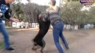 مزرعة كلاب فينوس فارم
