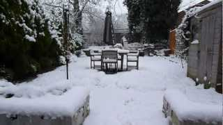 Staffordshire Bull Terrier Puppy's First Experience Of Snow In London