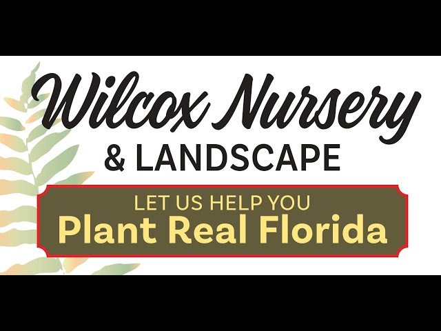 Cooking with Florida Native Plants: Series Teaser