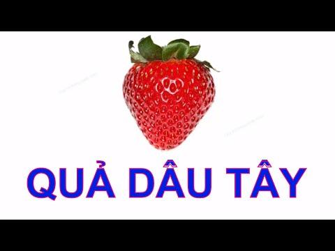 Bé tập nói Tiếng Việt | Dạy em học về các loại hoa quả | Em đọc trái cây | Dạy trẻ thông minh sớm