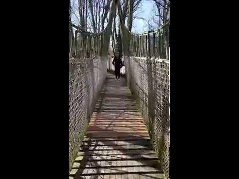 Alnwick Treehouse Rope Bridge