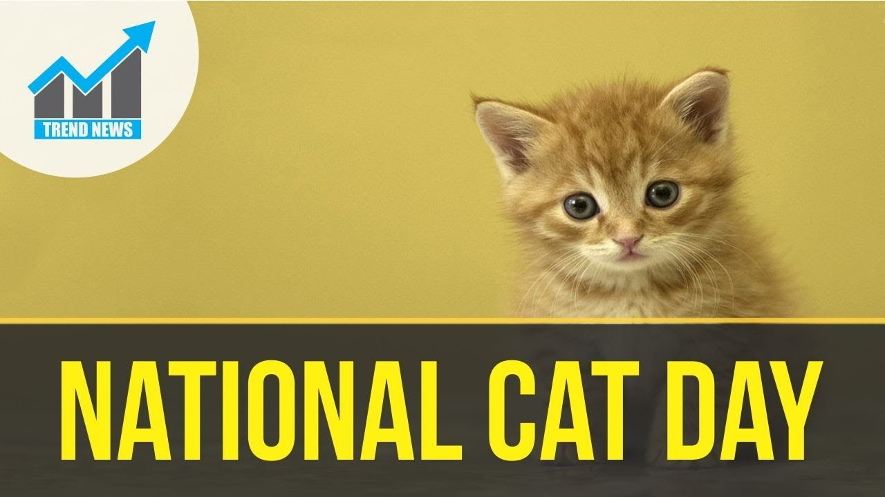 Celebrate National Cat Day with these 20 photos