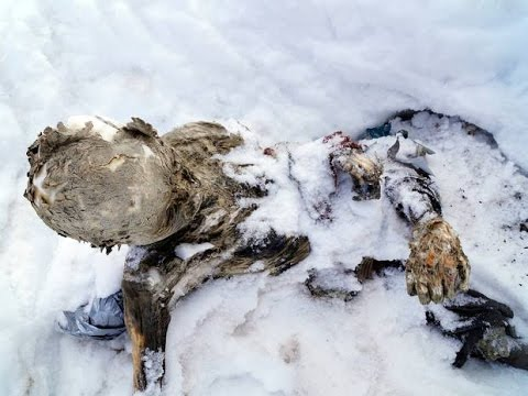 Two mummified bodies discovered in a glacier on Mexico's highest peak