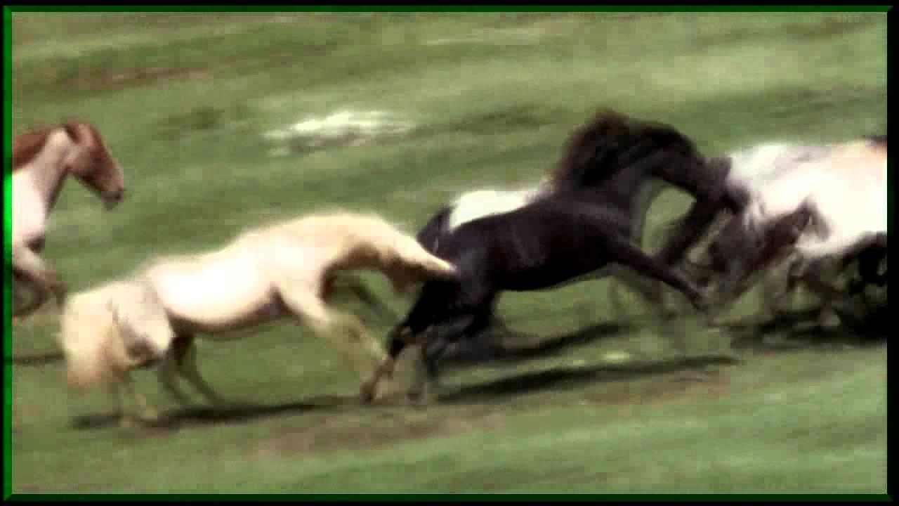 Молодая лошадь скачать бесплатно mp3