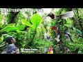 Suara Terapi Burung Kicau Jamin Burung Macet Bunyi Langsung Ikut Bunyi  Mp3 - Mp4 Download