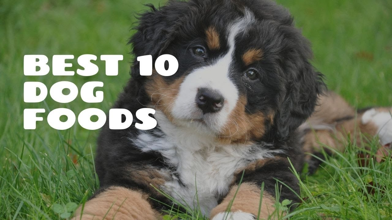 Best 10 Dog Foods. List Of Best Dog Foods With Key Points.
