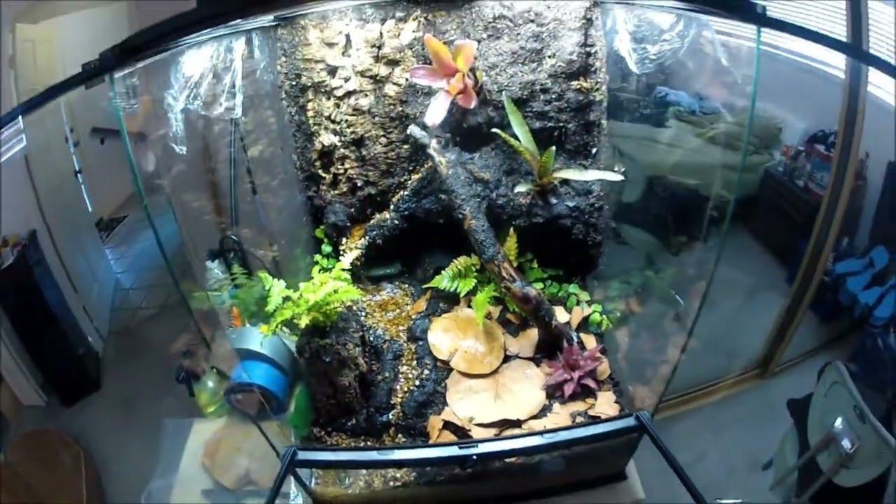 Dart Frog Vivarium Finally Built - YouTube 10 Gallon Paludarium