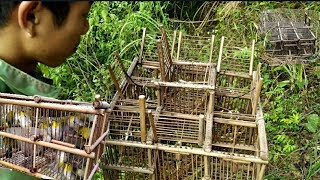 Bird Trap Black And The End Is Full Of Tips |  Ethnic Northwest Tv