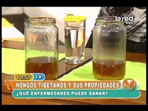 Hongo tibetano sirve para bajar de peso