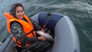Gambar cover Кета по лицензии  Отжимной ветер рыбалка на свой страх и риск.