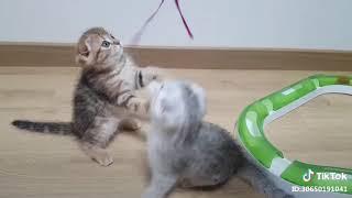 Cute Cat Funny Video Tiktok
