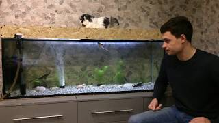 отличия в содержании осетров в аквариуме от других рыб