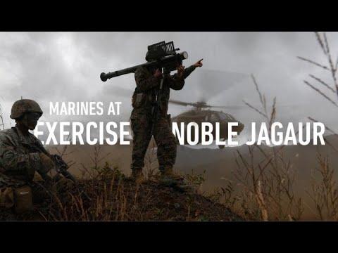 Noble Jaguar