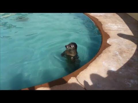 Skegness Natureland Seal Sanctuary - Full Walkthrough
