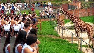 TOUR ZOOLÓGICO DE CURITIBA PARANÁ BRASIL