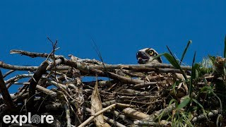 Osprey Nest Branch View powered by Explore.org thumbnail
