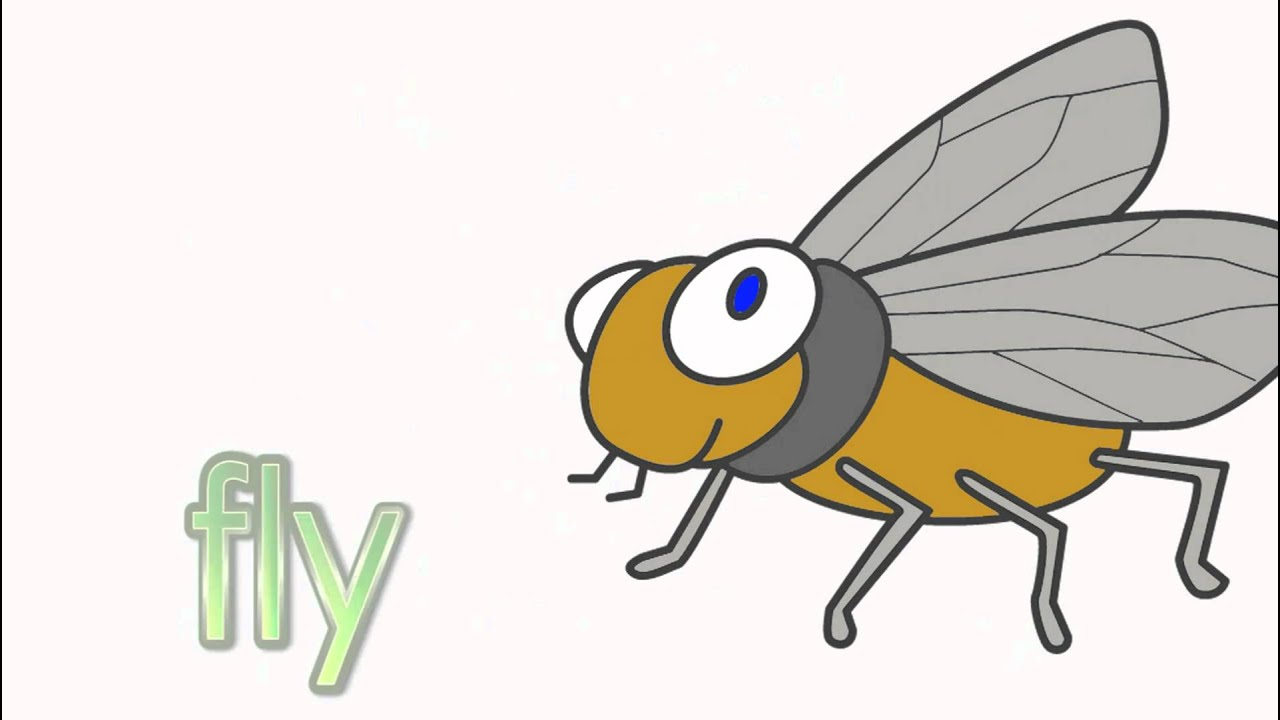 Learn Insects  Talking Flashcards  Youtube