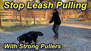 Stop Your Dog's Leash Pulling and Walk Beside You
