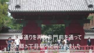 【東京大学 本郷キャンパス(赤門→三四郎池→正門)】