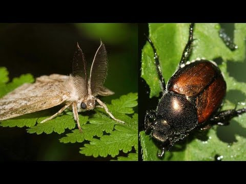 Traps In Residents' Yards Help County Watch For Invasive Pests
