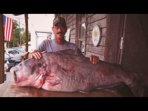 Missouri Record Fish Stories - Blue Catfish