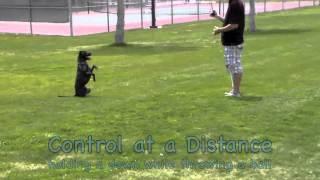 Demonstration Dog (sequel) - Einstein Dog Training - Fenton, Mi