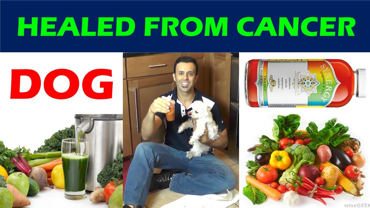DOG HEALED FROM CANCER/ NATURAL CANCER TREATMENT/