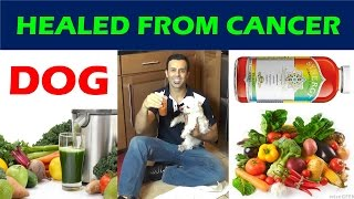 Dog Healed Cancer Natural Cancer Treatment