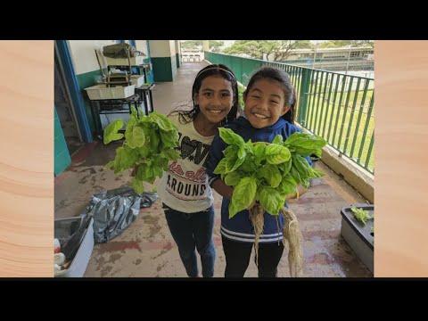 Take2: Kupu, Kokua Hawaii Foundation Offering $20,000 for Sustainability Solutions