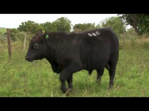 LOTE 32 - TAT 960 - ZAMBEZE