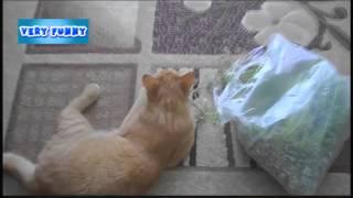 Кот и трава  Кот и пакет травы  Прикол  Приколы с животными  Смешное видео