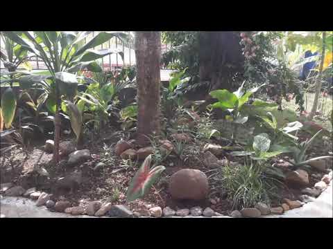 Tourist Center of Certified guided tours of Panama Garden