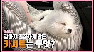 강아지용품 리뷰 강아지카시트 추천/쇼핑하울