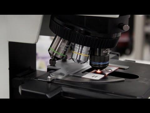 Lab Week 2013: Mayo Clinic Laboratory Science Program