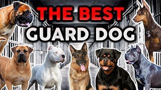 THE BEST GUARD DOG BREED! Ultimate Dog Championship