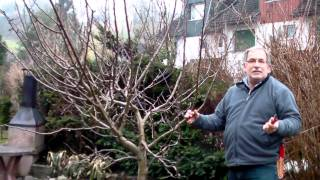 Repeat youtube video Schneiden im Garten 2011 Familie Boeni 4v5 - Hohlkronenschnitt beim Apfelbaum 1v2