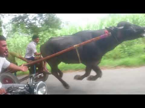 Deepak sachin jhoota race